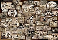 Mickey Mouse Black & White Collection (1000 stukjes)